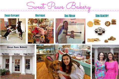 Customer Highlight: Meet Colleen O'Fallon, Owner of Sweet Paws Bakery, Gainesville Florida
