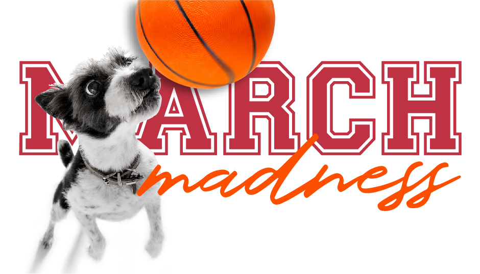 March madness pet spirit wear